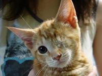 Willy's story Hi! I'm Willy. I'm a cute orange tabby