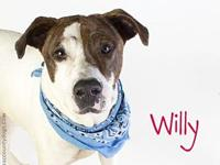 WILLY's story Visit Willys webpage