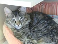 Wilma's story TAILS adoption fees cover spay/neuter,
