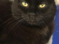 Wilma's story Wilma is a beautiful black cat who came
