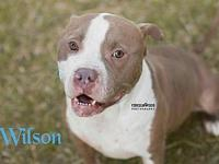 Wilson's story Visit this organization's web site to