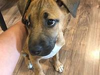Winchester (in foster care)'s story This cute little