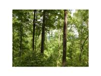 FOREST FOR ONLY $950 PER ACRE. 979 woody acres found in