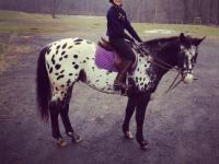 Windchime- AVAILABLE FOR IN BARN LEASE! 16.1h appaloosa