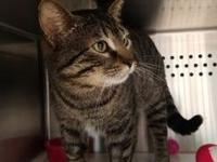 Winky's story Winky is approx 1 year old male neutered