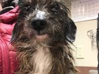 Winky's story Winky was found on 12/16/18 on Royal near