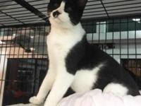 Winky is a handsome white and black boy who is around 9