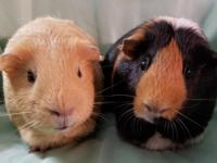 Winnie and Cookie are just stunning.  Winnie is all