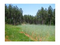 Timber investment and recreation tract with commercial