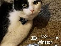 Winston's story If you're interested in giving Winston