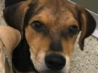 Winston's story Meet the Happy Hound mix Puppies!