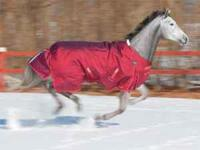 Winter Horse Blankets & Hoods New Shires Brand in the
