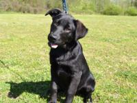 Winter is a pretty 5 month old Labrador Retriever mix,