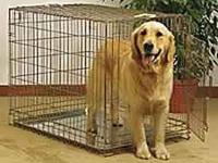 I am selling my Wire dog crate. I only used it for a