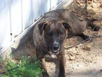 Wirehaired Terrier - Pepper - Medium - Adult - Female -