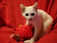 My story Meow my name is Wise Guy, I'm a 4mo old White