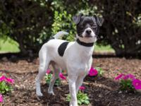 Wishbone is a happy-go-lucky guy who loves being around