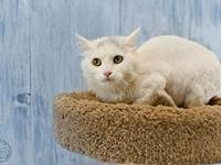 Wisp's story Wisp is an affectionate 3 year old female.
