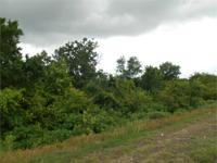 32.80 acres of wooded land with highway frontage, in