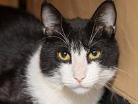 My story Wobbly is a quirky, super playful young guy