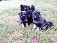 NYS PD 913 I have a trash of puppies. I have males and