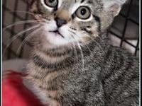 WOLFIE's story $97.50 FEE INCLUDES: neutering/spaying,