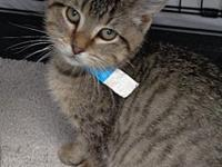 Wolfie's story -- -- Kitten Division Adoption Center,