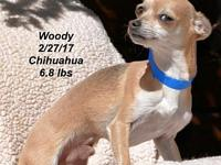 Woody's story Please contact Constance