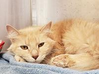 Woody's story Woody is a friendly 2-3 year old male