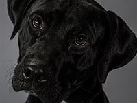 My story My name is Woody. I'm a 58 lb Male Lab mix
