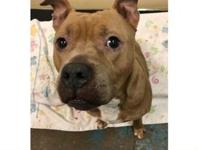 Woofgang's story Wolfgang was found on 11/20/18 on East