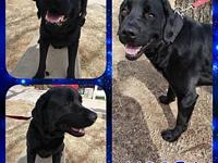 WOOFY's story Please contact Brandi