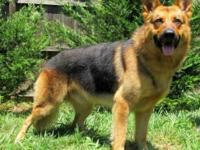 Rocket City Kennels has two luxurious coated black and