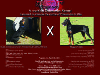 Here is an opportunity to own a puppy from one of the