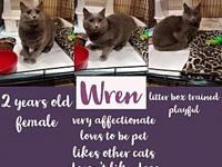 Wren's story 2 years old, sweet, affectionate Wren is a