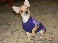Hi there I am looking for a male chihuahua. Have to be