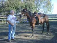 barrel saddle billy cook Classifieds - Buy & Sell barrel saddle