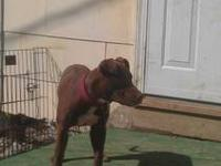 I have 4 Beautiful APBT'S that must go now..(With