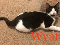 My story Hello, my name is Wyatt. I am a handsome young