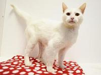 *WYNONA's story Wynona is an outgoing, affectionate,