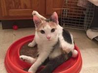 Wynonna's story Wynonna is a darling 7 month old female