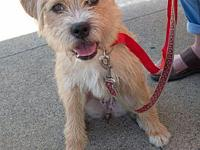Wyona's story Wyona is a spayed female terrier mix,