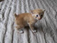 Kittens will be ready on December 21, 2012 Kittens will