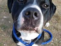 My story Hey there, I'm Xavier! I'm a one year old pit