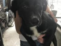 Xena is a sweet girl looking for her forever home. If