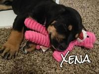 Xena's story You can fill out an adoption application