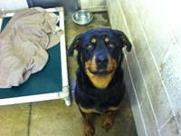 Xena's story Xena is a beautiful 1 1/2 yr old rottie