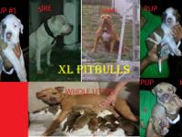 i have 3 males pitbull puppies for sale left, they are