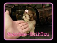 Beautiful teeny tiny baby girl still available...She is