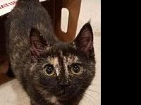 Yaritza's story 5 months old, affectionate, playful,